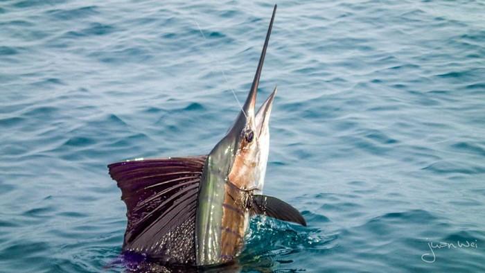 Spectacular fish