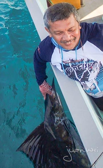 sailfish-rompin-ary_150828_2408