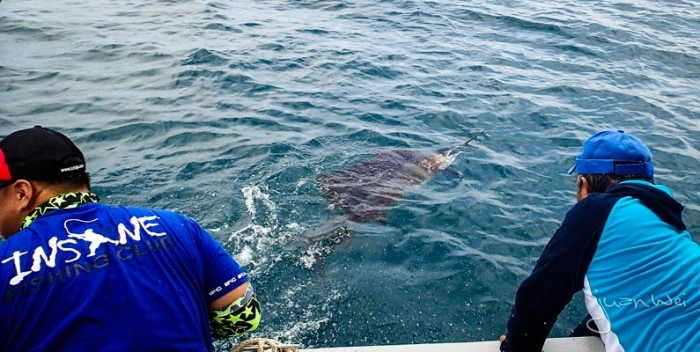 sailfish-rompin-ary_150828_2611
