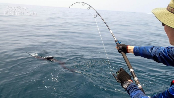 sailfish-fishing-rompin-doc_151008_6882