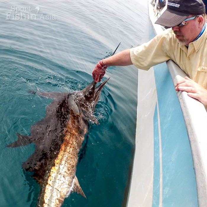 sailfish-fly-fishing-rompin-doc-sek-mike_151008_7243