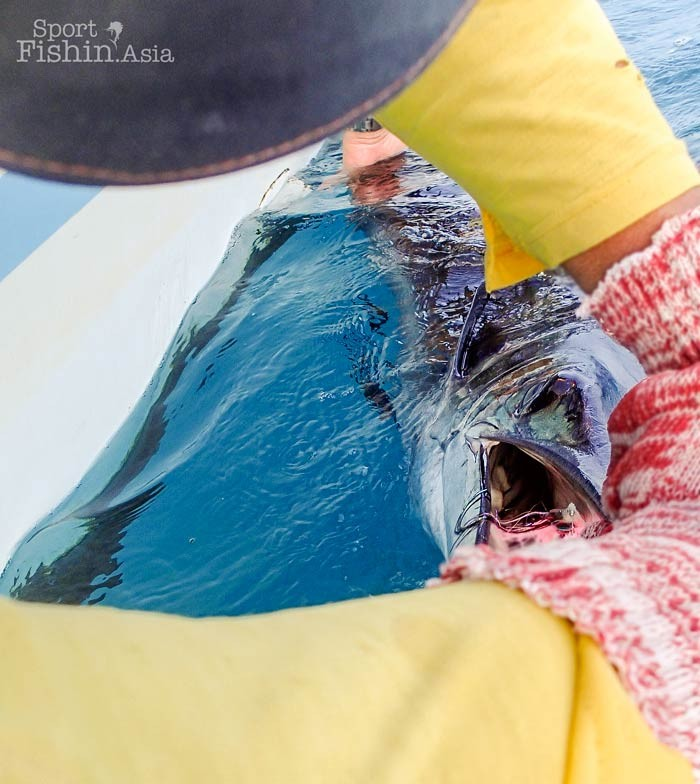 sailfish-fly-fishing-rompin-doc_151008_7120