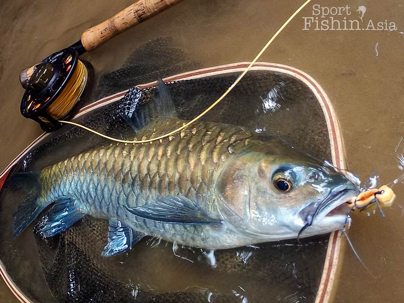 Thai Mahseer Fishing