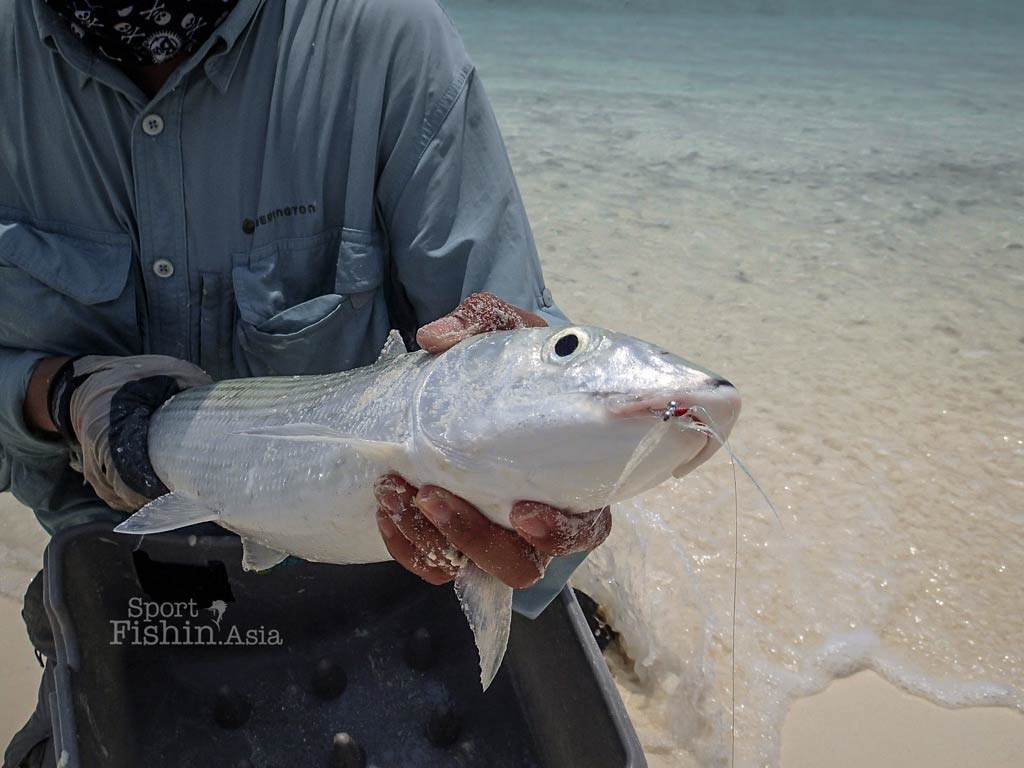 maldives-bonefish-fly-fishing_150323_7517