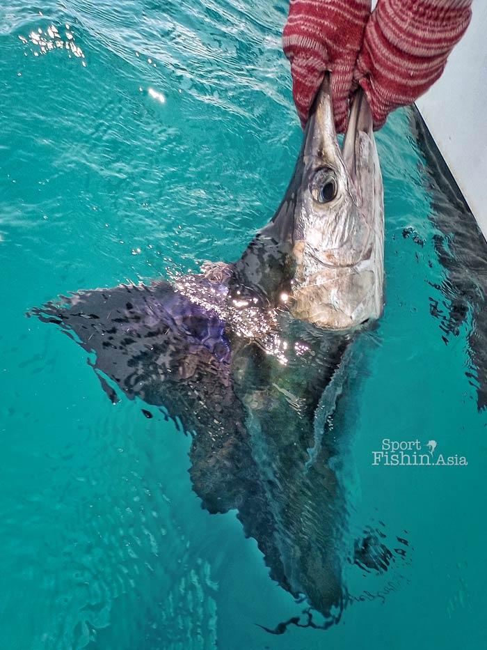 rompin-sailfish-20160315-(2)