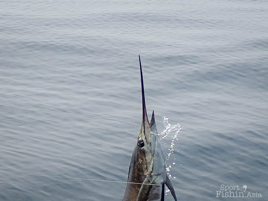 sailfish-rompin-scott-20150920-(688)