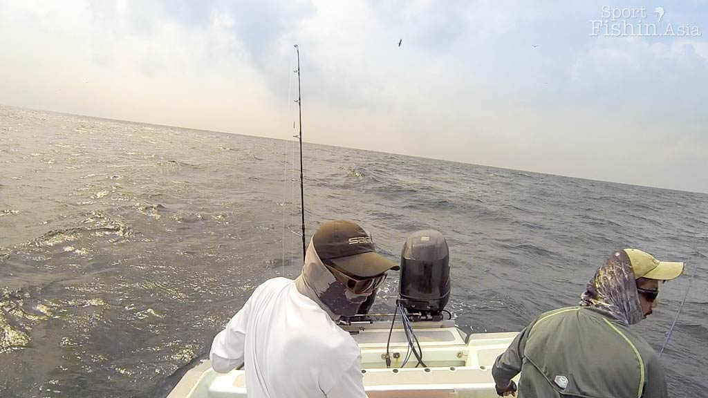 fly-fishing-rompin-sailfish-dron-20150824-(1)