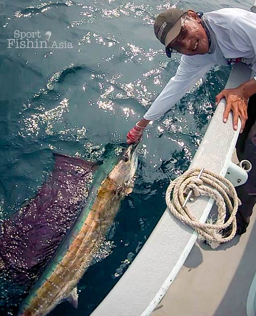 reviving-rompin-sailfish-jw-