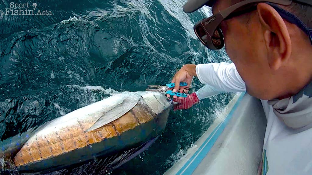 rompin-sailfish-release
