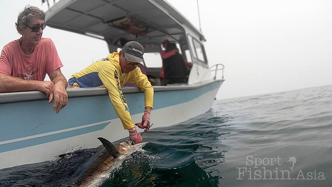 sailfish-rompin-barry-release-