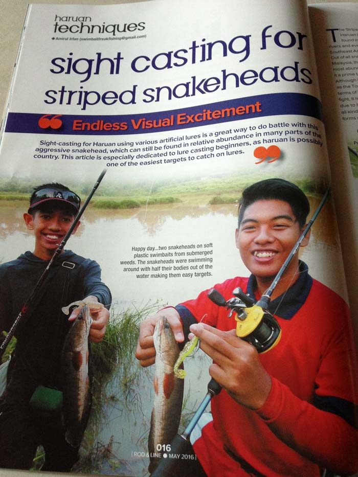sight-casting-for-striped-snakehead-amirul-20160505-(3)