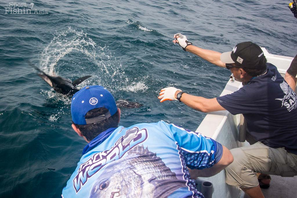 rompin-sailfish-fishing-steve-darcy_160816_6927
