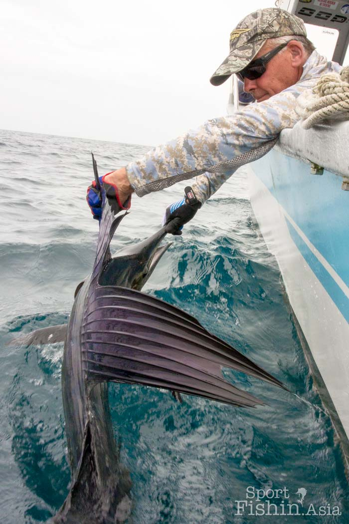 Tim from Brisbane, IFFF CCI and a sailfish with a fancy sail. The dorsal fin of sailfish do come in many shapes.