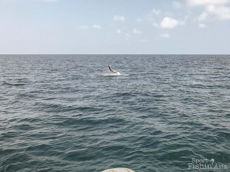 sailfish-rompin-bryce-helms-emily-01082017–(17)