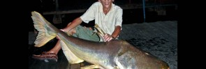 Fishing the Giant Mekong Catfish at Bung Sam Ran Thailand