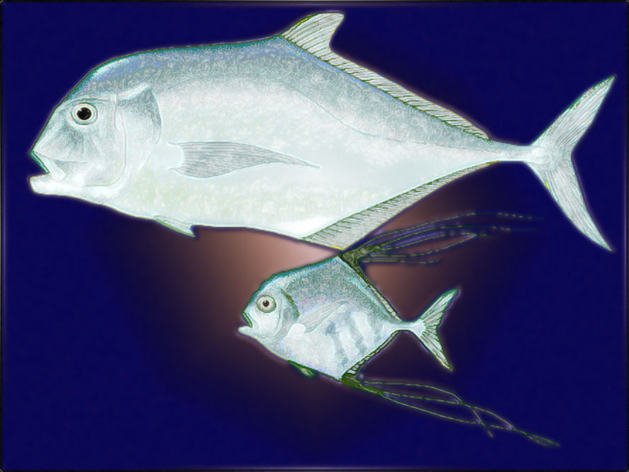 Diamond Trevally, Ebek