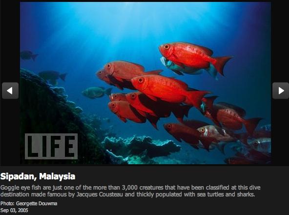 Top 10 Scuba Diving Spots