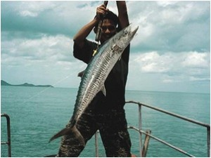 Tenggiri, (Kingfish) Narrow-barred Spanish Mackerel