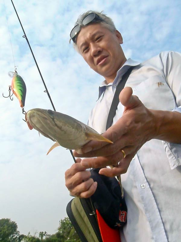 Snakehead Fish Haruan