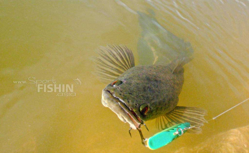 Haruan 101 – Sneaking Up on a Fish
