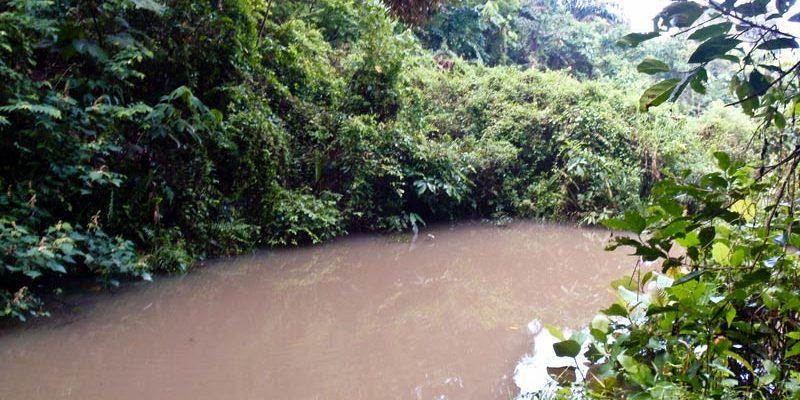 Hidden haruan pond