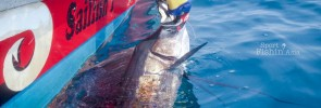 Video: Up-close with a Kuala Rompin sailfish