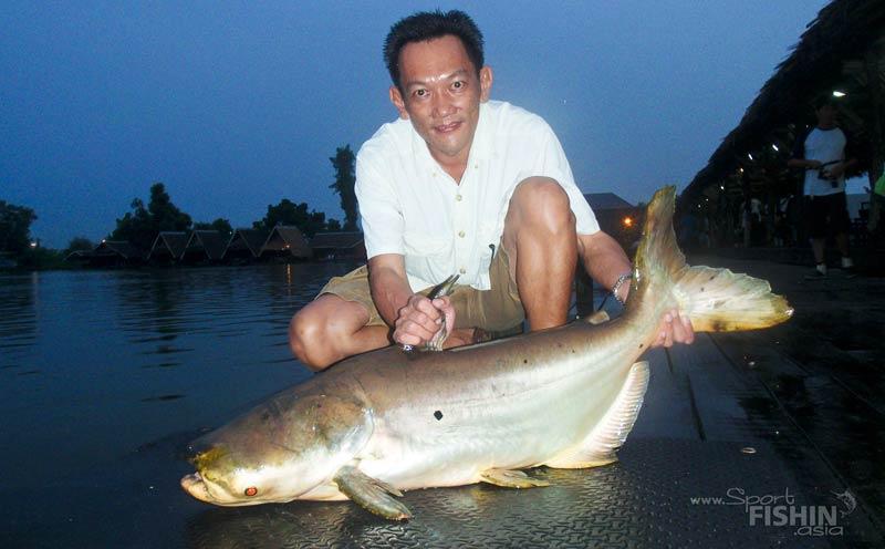 Giant Mekong Catfish to prowl Kenyir Lake?