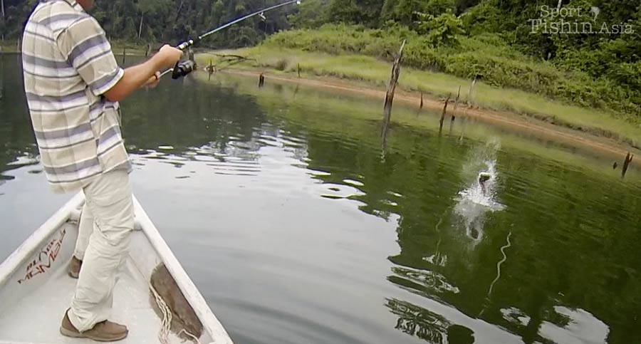 Beginners' Guide to Snakehead Fishing – How to Get Started?