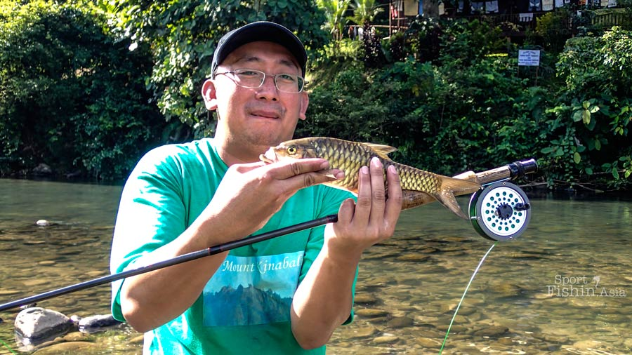 Fly Fishing for Mahseer in Babagon Sabah [video]