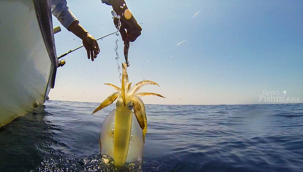 Squid fishing in Rompin