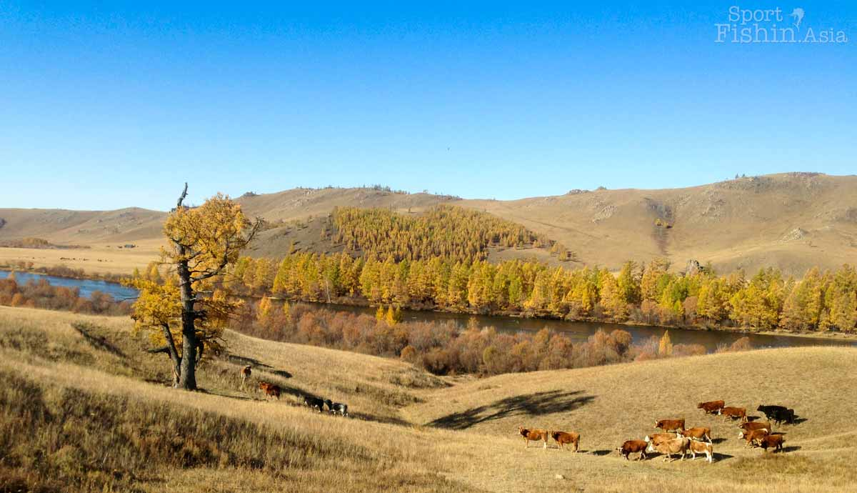 Beautiful autumn scene by the river under blue skies with cows grazing in foreground