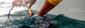 Popping and casting lures for sailfish