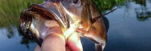 Tough day at the office – peacock bass fishing in Malaysia with Bruce