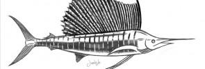 My peacock bass and sailfish art printed on Abu Garcia and PENN t-shirts