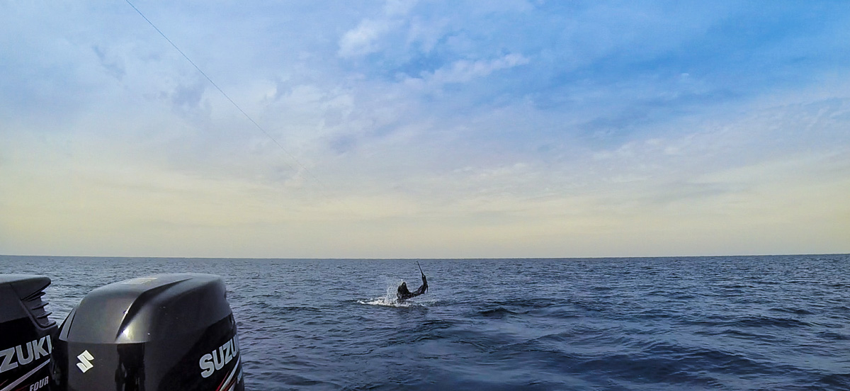 Sailfish tail-walking behind the stern