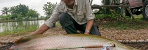 Arapaima Fly Fishing at AmazonBKK Bangkok Thailand