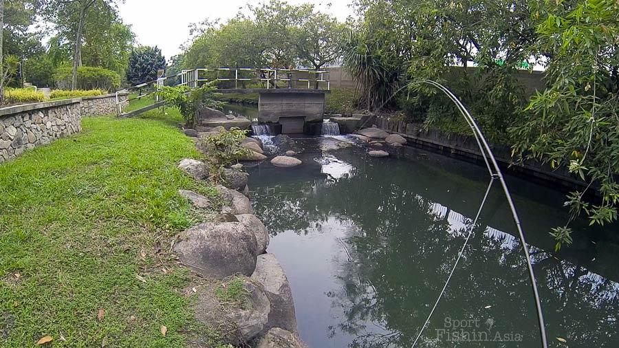 Urban Fly Fishing – Canal Tilapias