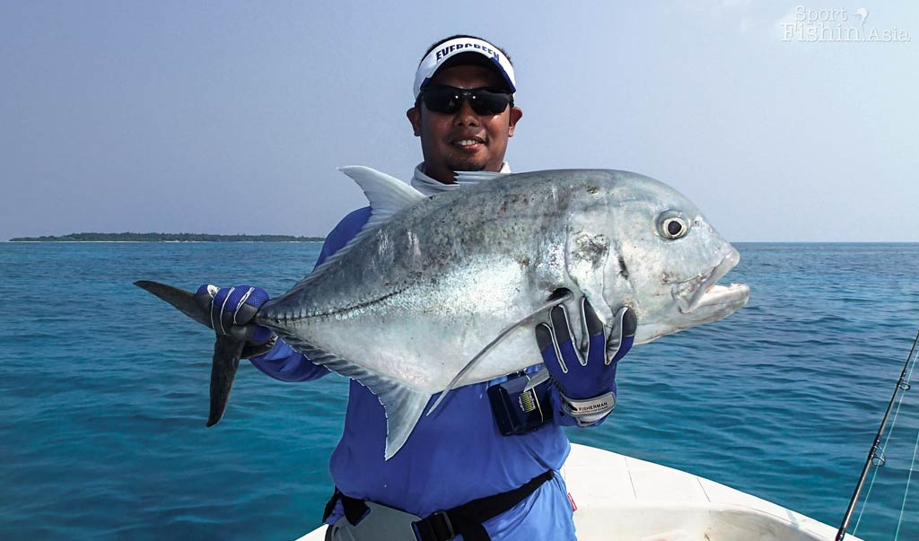 Giant Trevally in Maldives