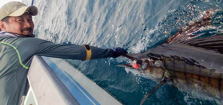 Eddie's first sailfish on fly [video]