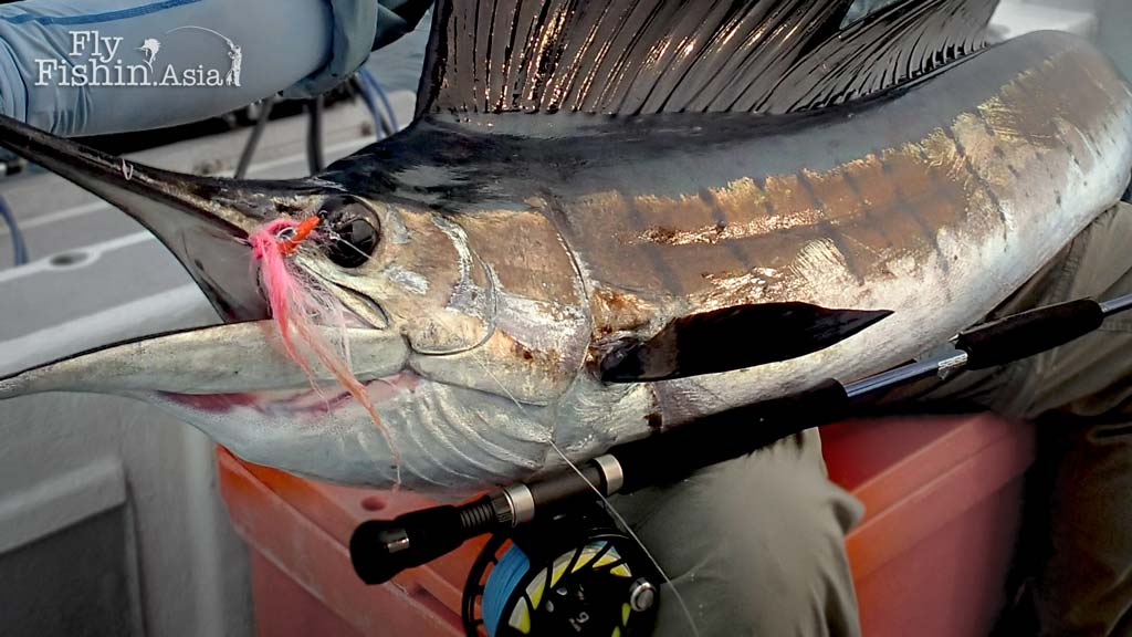 Sailfish on fly – When it comes together