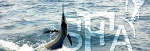 Recent Guests and Their Sailfish Catch
