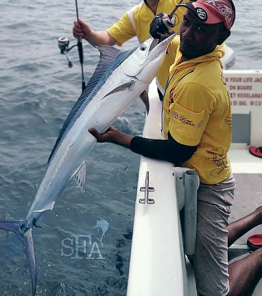 What Other Fish Species Can You Catch in Rompin Other Than Sailfish