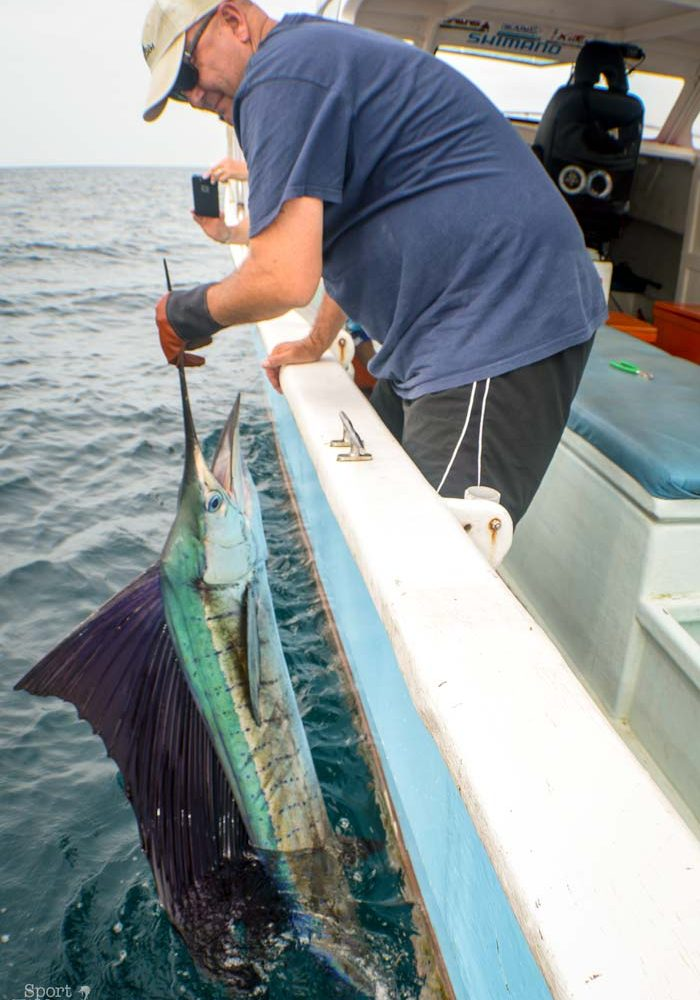 Rompin Sailfish Fishing with John and Scott [video]