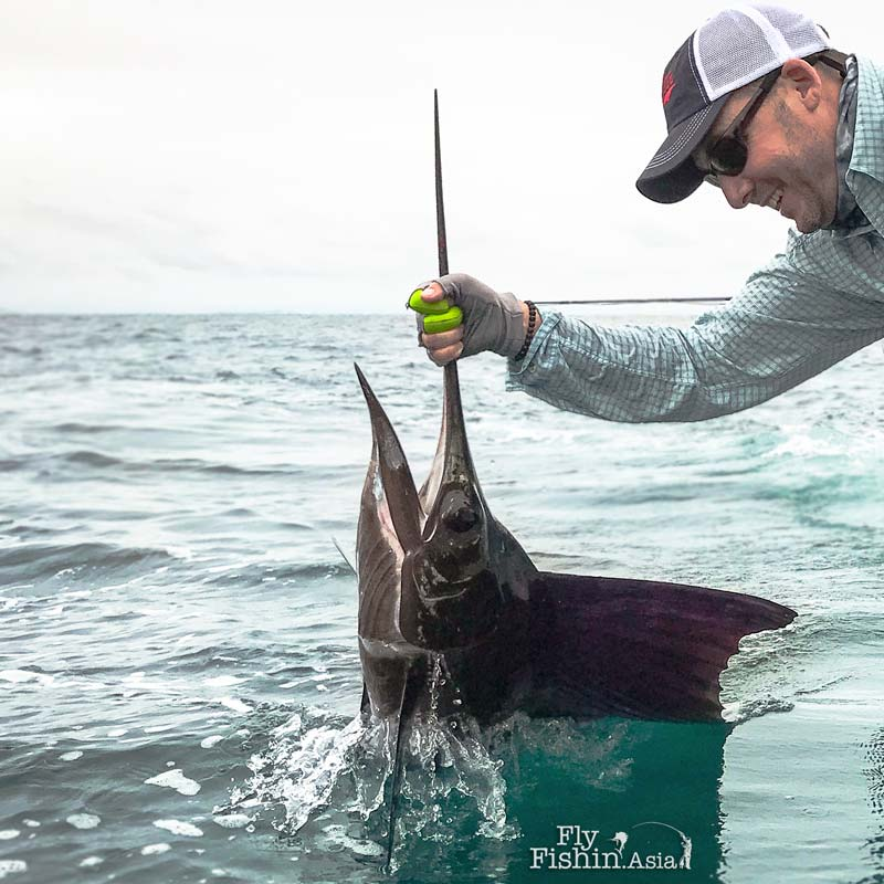 Fly fishing for Sailfish in Rompin Video by David Carr