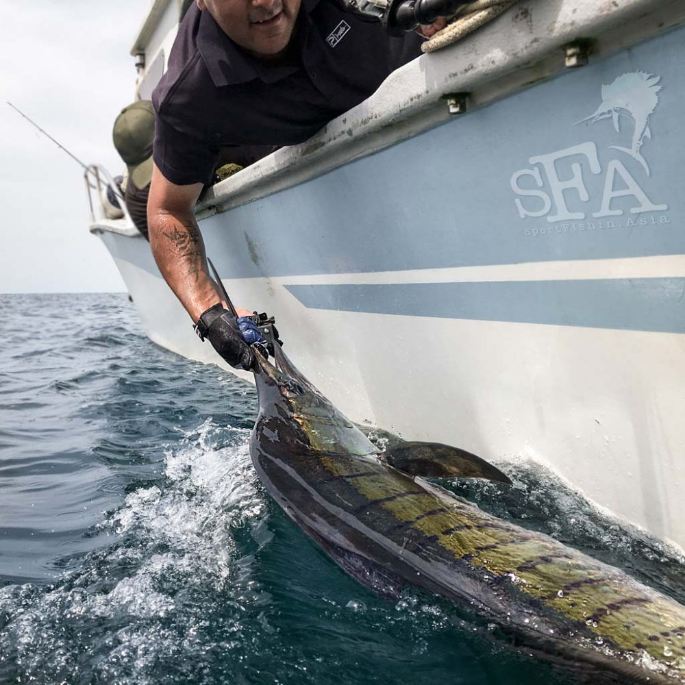 Choppy Seas, Fighter Jets, Stickbaits – Fishing with Pierre Boulus and friends