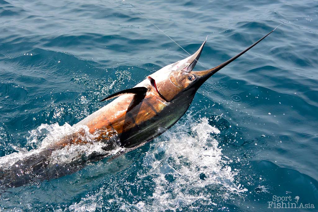 Epic Day in Rompin Video – Hot Fishing and Geoff With A Black Marlin
