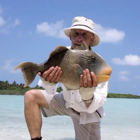Big Yellowmargin Triggerfish In Maldives With Mike Stevens