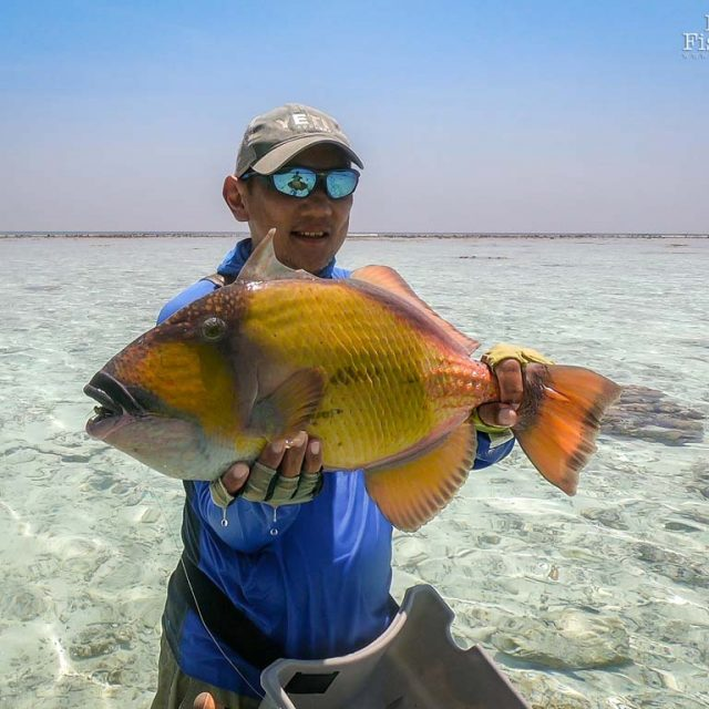 About Triggerfish