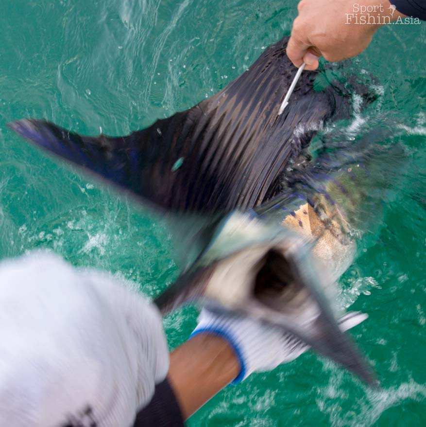 End July Sailfish Trip for NZ Trio