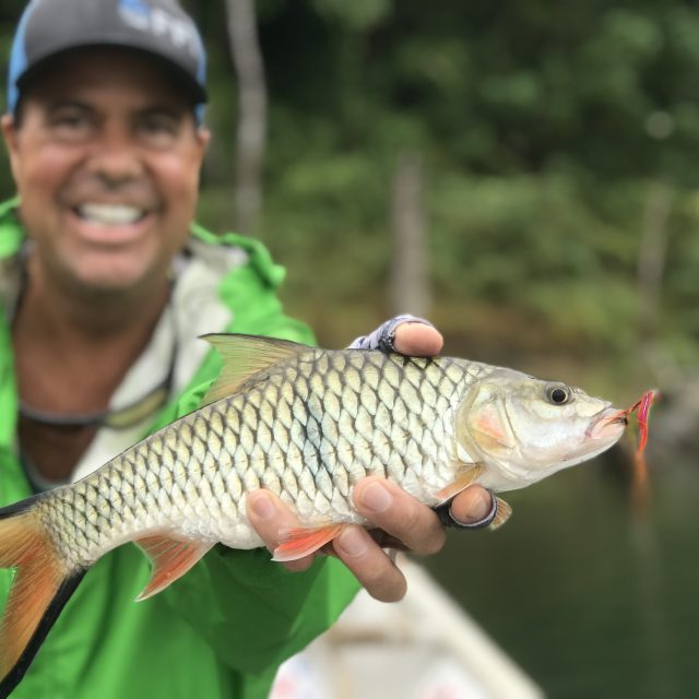 Royal Belum 2 days fishing and houseboat stay experience for our FFI guests | Video